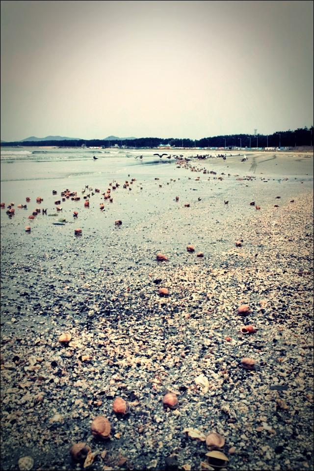 사곶 해변 갈매기-'백령도 해변'