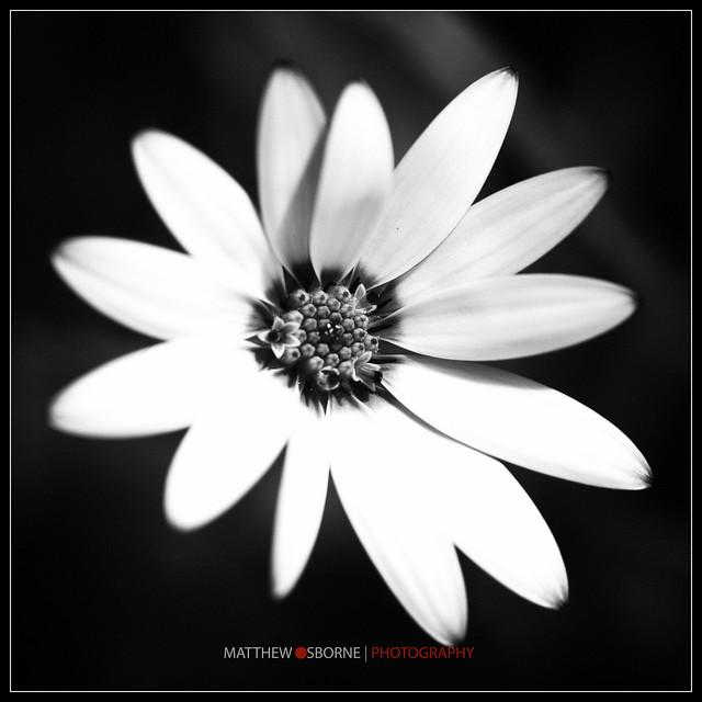 Leica Macro