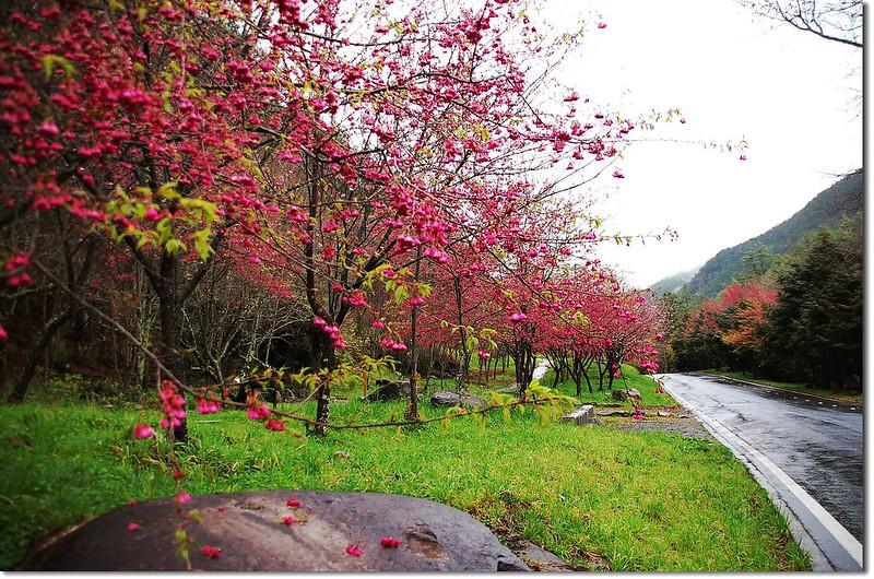 武陵花季 2