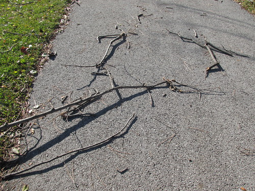 "Fallen tree branches, twigs and debris. A roller blader's ""Arch Nemesis.""  West Park.  Des Plaines Illinois.  Tuesday, November 19th, 2013. by Eddie from Chicago"