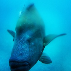 Came out of nowhere! #greatbarrierreef #australia #seeaustralia #exploringaustralia #australia #oz #fish #travel #travelmemories #tourism #touristactivity #sea
