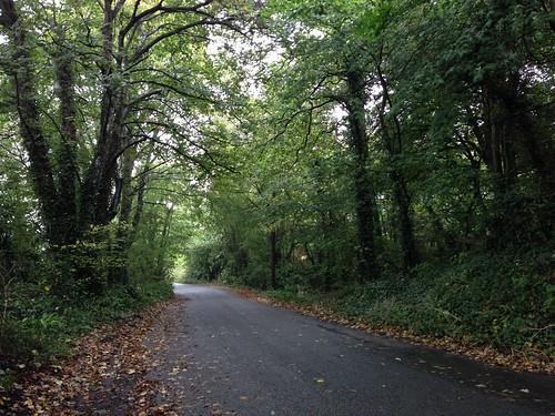 Road near Kilkenny