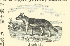 Image taken from page 29 of 'A New Geography of South Africa ... Sixth and revised edition, etc'