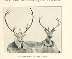 Image taken from page 287 of 'Peaks and Pines. Another Norway book ... With ... illustrations ... by the author'