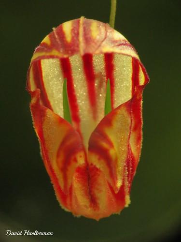 naturaleza orchid flower southamerica nature fleur america américa colombia flor tropical orquidea orchidée tropicos amérique colombie amériquedusud sudámerica américadelsur tropiques trópics