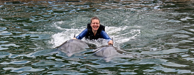 Swimming with Dolphins - Key Largo, Florida - holding on to dolphins