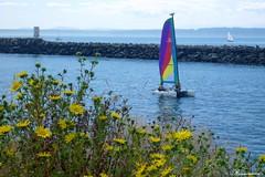 彩帆 Colorful sailboats at Golden Garden Park