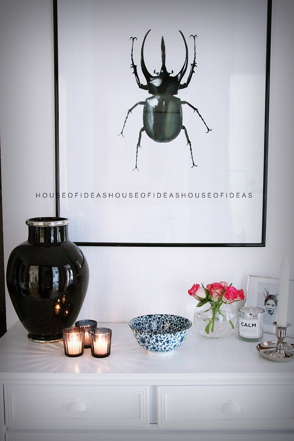 beetle photograph via House of Ideas