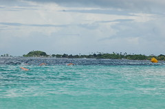 Manase Swim