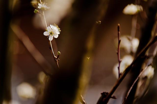 Spring Time 19