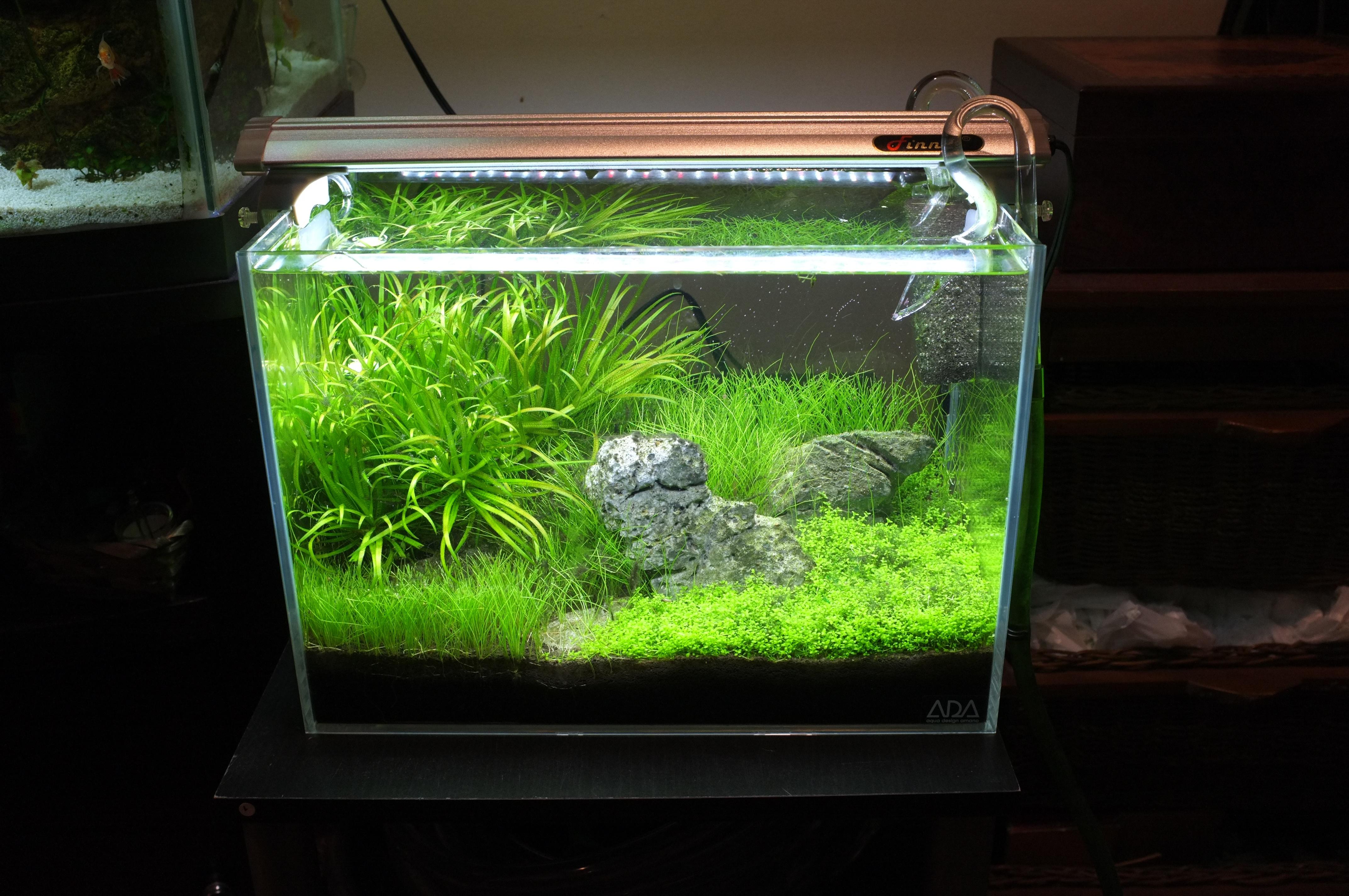 Starting first saltwater tank beginners discussion for Saltwater fish tanks for beginners