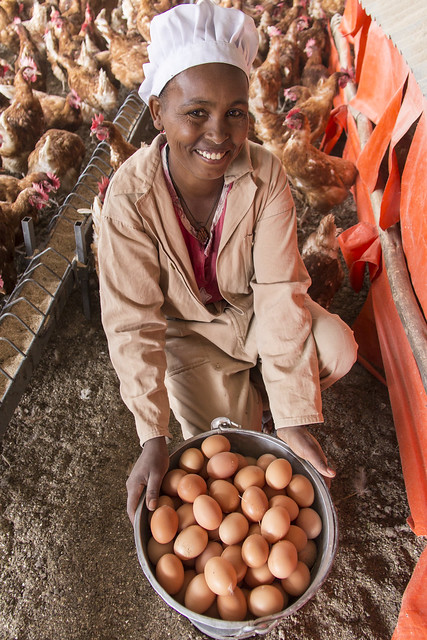 A woman smiles and displays a bucket full of brown chicken eggs.