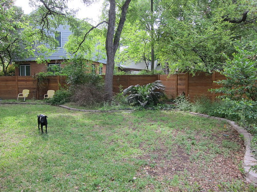 Before - Back yard