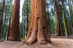 Kings Canyon & Sequoia - 395
