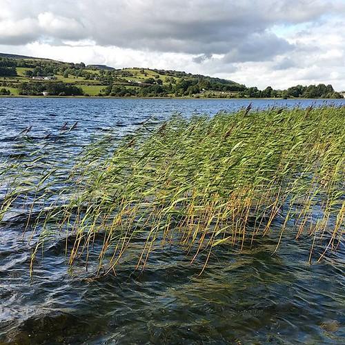 Lough Arrow. #ireland
