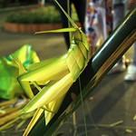 Bamboo grasshopper.
