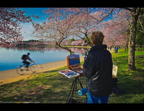 Painting the renewal of spring and the ephemeral nature of life - cherry blossoms along the Tidal Basin in Washington, DC by Sam Antonio Photography