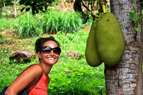 A huge jack fruit, right outside our room in Kep