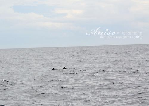 宜蘭賞鯨_025.jpg