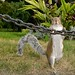 Upright Squirrel Brigade by andyi