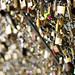Fence Friday - Padlocks by Kate H2011