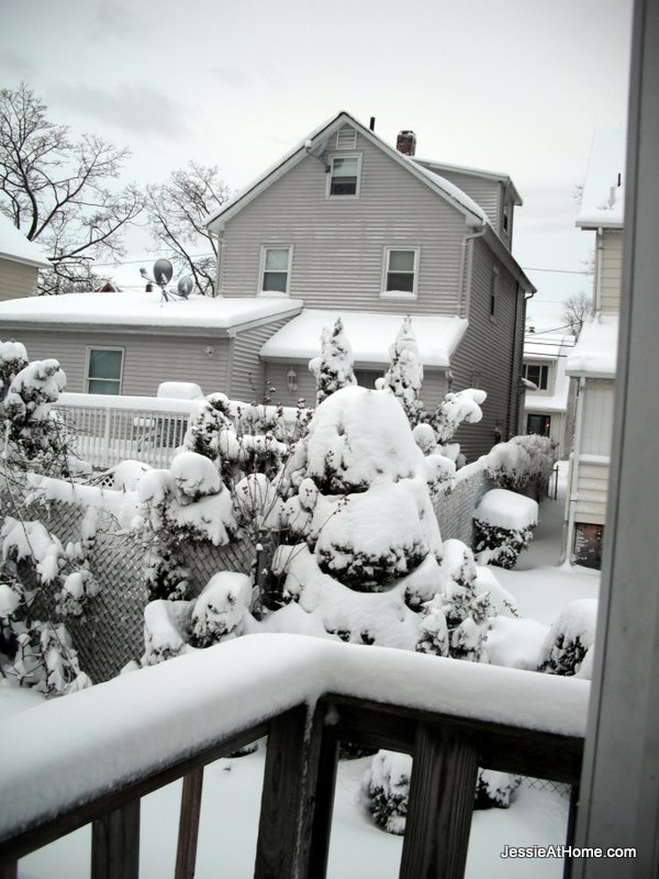 Snow-covered-bushes