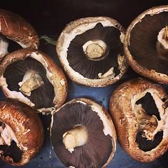 medicinal mushroom, agaricus, mushroom, agaricaceae, produce, food, agaricomycetes, edible mushroom, shiitake,