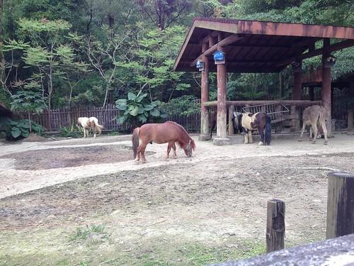 3溫帶動物區 _蒙古野馬