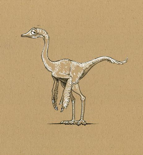 small coelurosaur