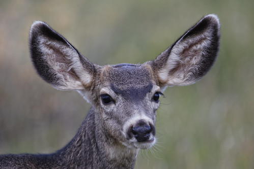 What ears?