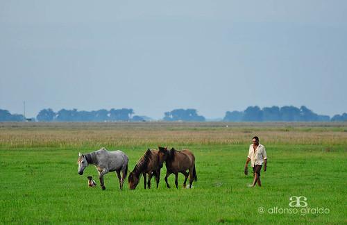 horse dog caballo colombia perro soga llanura llanero arauca rejo llanosorientales sabanasdearauca