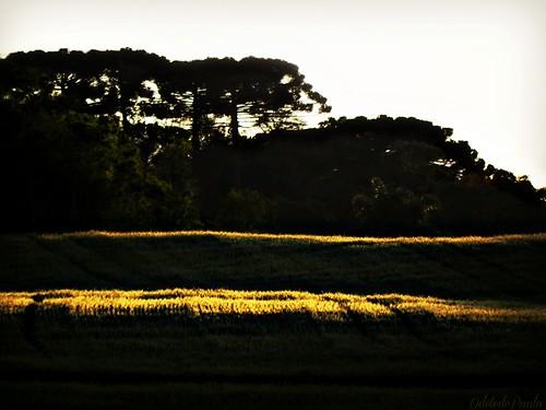o repouso do campo by Odete de Paula