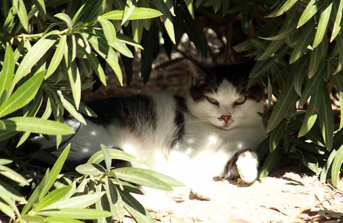 134240-1.jpg by Robert W Gilcrease