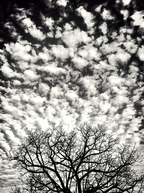 Against the winter sky