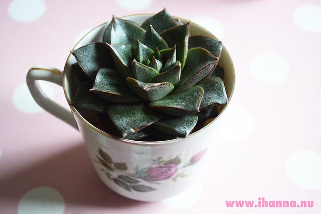 Succulent in a cup
