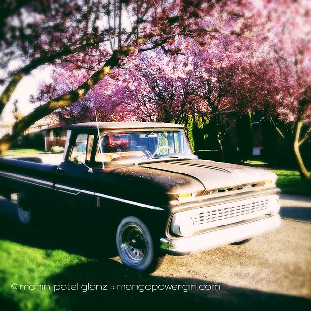 black truck under the ume tree