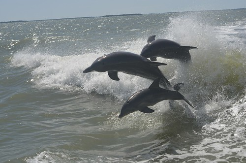 Triple dolphin action