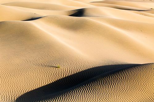 light shadow contrast gold golden sand pattern desert dunes dune uae abudhabi abu dhabi suwaihan nahshala nahshalah