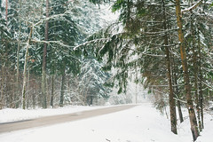 White Winter in Lithuania | Road