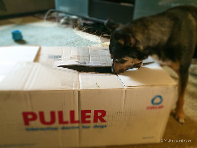 Puller dog toys arrived in a big box