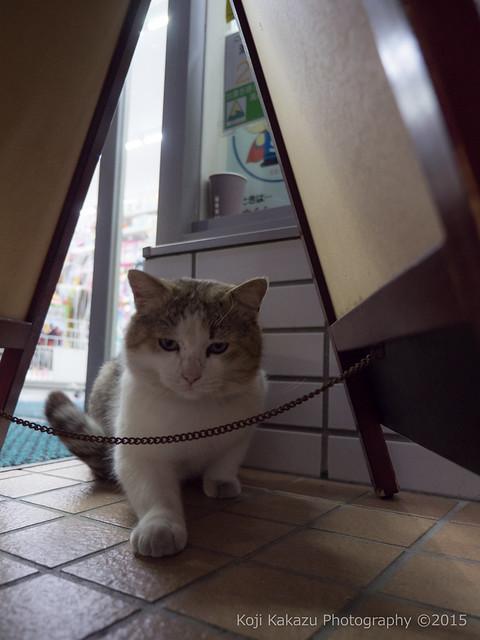 近所の猫 03