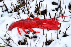 red lobster in the snow