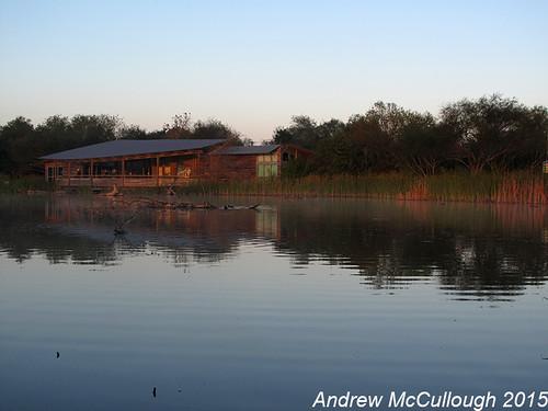 texas southtexas weslaco texasbirds worldbirdingcenter