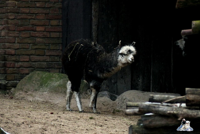 Zoo Berlin 06.02.2015  70