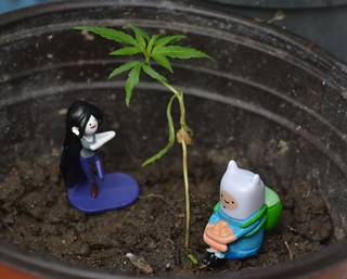 I love my weed
