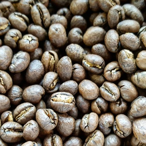 Roasted and ready for your weekend brewing happiness: Guatemala Huehuetenango Xinabajul Peaberry. Come get 'em! ☕❤#caffedbolla #singleorigin #peaberry #guatemalancoffee #coffeebeans #slc #coffee #roaster #coffeeroaster