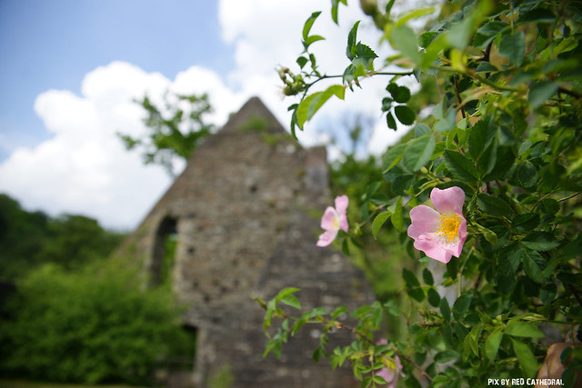 Abbaye de Villers in Villers-la-Ville