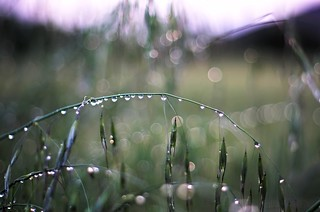 evening droplets