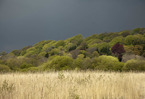 sky black reed nature clouds beds reserve gower thunder oxwich