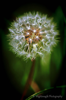 Beautiful weeds, Truly stunning.